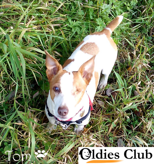 Oldies Club, sponsor dog, terrier, rescue, Tom