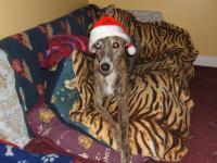Bryn-Christmas1