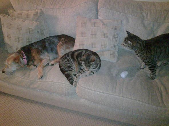 tesscats