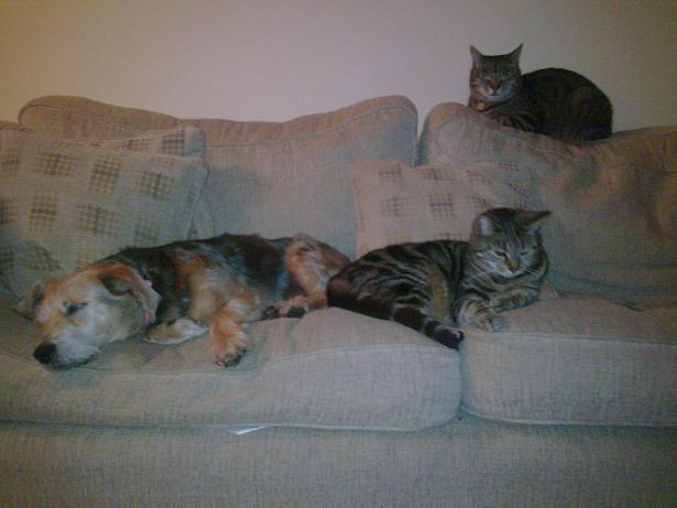 Tess detested cats when she arrived at her foster home