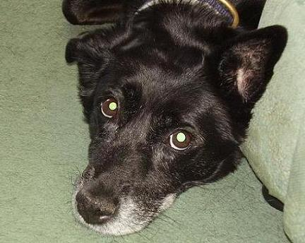 Playful Pip (Oldies Club) Titchprevious