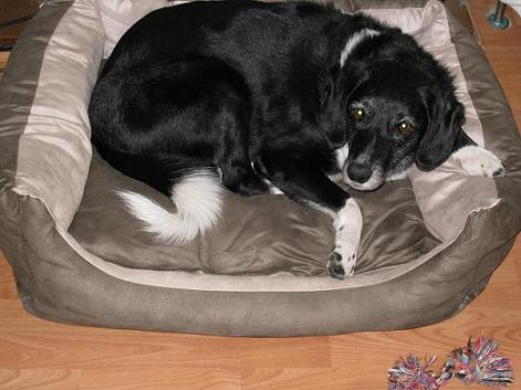 Bella the Belle (Oldies Club - Lincolnshire) Bellabed