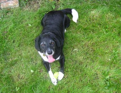 Bella the Belle (Oldies Club - Lincolnshire) Bellalawntongue2