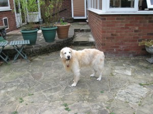 Jessie The Golden Girl (West Essex) Img_0942-300x225