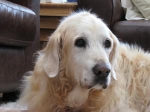 Jessie The Golden Girl (West Essex) Img_0996-300x225