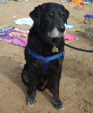Handsome Beethoven (Oldies Club) Beethovenbeach