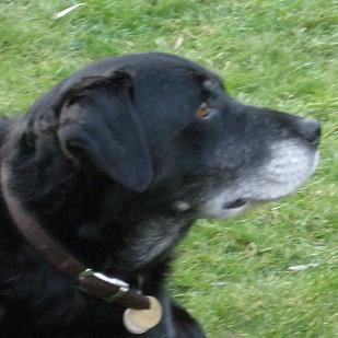Handsome Beethoven (Oldies Club) Beethovenface