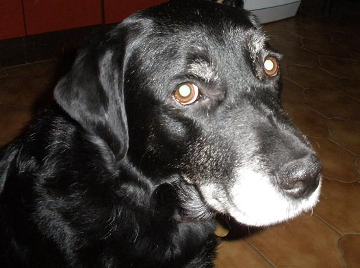 Handsome Beethoven (Oldies Club) Beethovenface2