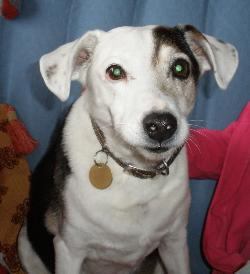 Camelot - JRT X (Hertfordshire) CamSweetFace