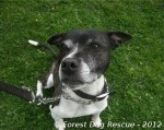 Seth (Forest Dog Rescue, Worcs)