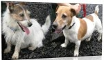 Comet & Bonsai (Northamptonshire Animals Needing Nurturing & Adoption (NANNA)