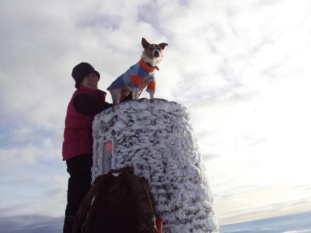 Baxter, Oldies Club, sponsor dog, Snowdon