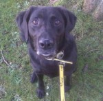Barney (Dogs Trust West Calder, Scotland)
