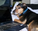 Loyal Lucky – Laptop literate! (Oldies Club, fostered Teesside)
