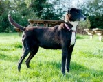 Ozana (Carpe Canem Rehoming, kennelled Essex)
