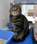 Fin (National Cat Adoption Centre, Sussex)