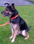 Guinness (Oakwood Canine Rescue, East Yorks)