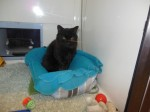 Sammy (Cats Protection, Sussex)
