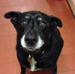 Handsome, gorgeous Jacko! (Oldies Club, fostered Bedfordshire)