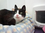 Trevor (RSPCA Sheffield Branch)