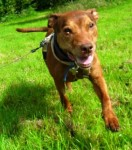 Copper (Rescue Remedies, Surrey)