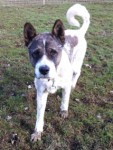 Genghis (South East Dog Rescue, Kent)