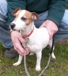 Lola  (RSPCA Lincolnshire Mid and Lincoln Branch)
