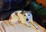 Sadie (Private rehoming, Gloucestershire)