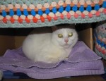 Snow Princess (Cats Protection, Sussex)