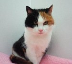 Tabatha (RSPCA Sheffield Branch)