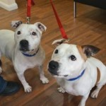 Missy and Bella (Battersea Dogs and Cats Home, London)