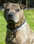 Roger (Blue Cross, East Sussex)