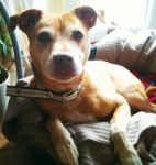 Roxy (Blue Cross Scotland, fostered Edinburgh)