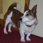 Short Shorty Shortlegs (Oldies Club, fostered Greater Manchester)