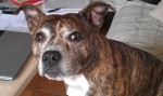 Tara Twinkletoes (Oldies Club, fostered Gloucestershire)