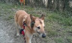Foxi (Blind Dog Rescue UK, fostered Hampshire)