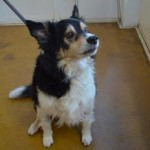 Albert (Battersea Dogs & Cats Home, London)