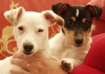 Bella and Purdey (Rescue Remedies, Surrey)