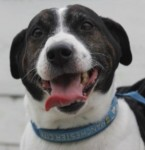 Dyson (Freshfields Animal Rescue, Liverpool)