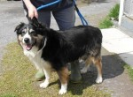Molly (PAWS Dog Helpline, North Wales)