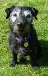 Posh (National Animal Welfare Trust, Berkshire)