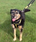 Sheena (Dogs Trust, Glasgow)