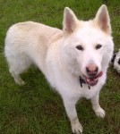 Laska (RSPCA Reading with Oxon Border)