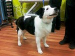 Cassie (Helping Pets, North East)