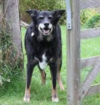 Happy Holly Longlegs (Oldies Club, fostered Kent)