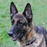 Kia (Leicester Animal Aid)