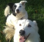 Molly and Mickey (RSPCA Macclesfield, kennelled Staffs/Cheshire border)