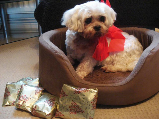 Oldies Club, Christmas, sponsor dog
