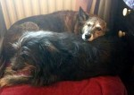 Holly & Tia – Want to stay together! (Oldies Club, fostered County Durham)