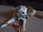 Pretty, Lively Lady! (Oldies Club, fostered South Yorkshire)